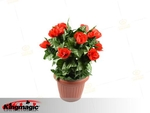 Mekar Rose Bush - Remote Control - 20 bunga